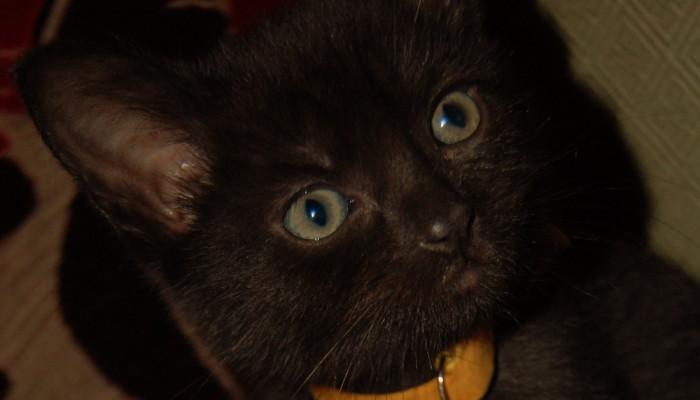 Sid the Kitten