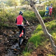 Trials beck section